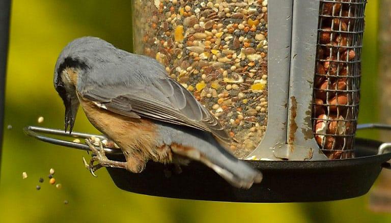 stop bird seed feeding rats