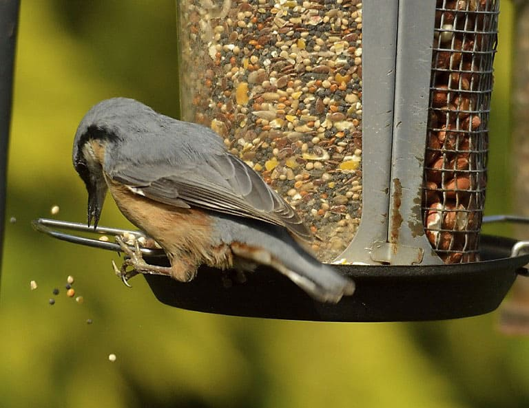 How To Stop Rats Eating Bird Food
