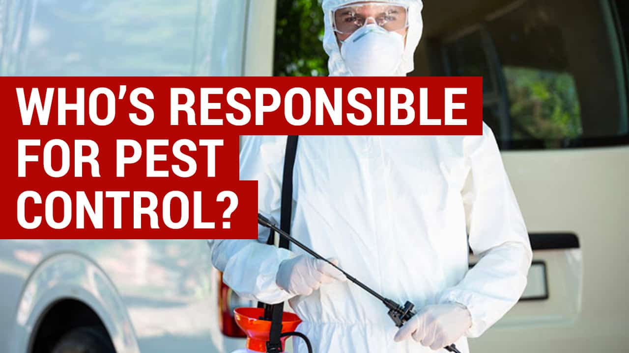 who is responsible for pest control when renting - landlord or tenant