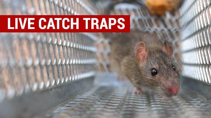 best live catch rat traps