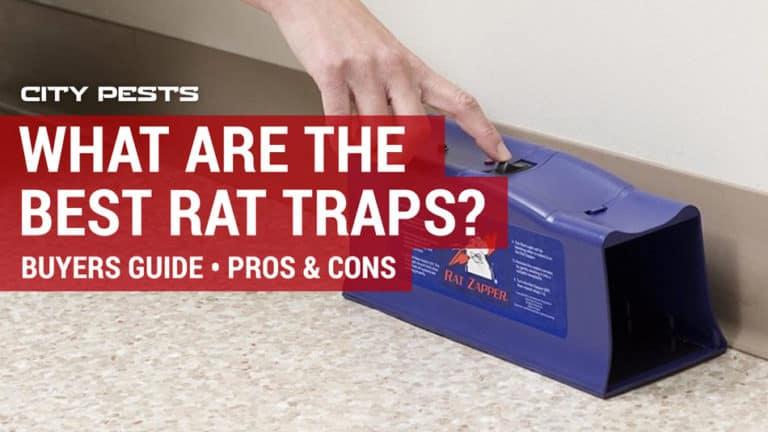 best rat traps to buy