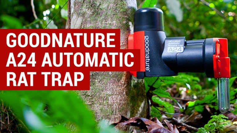 goodnature a24 rat trap review