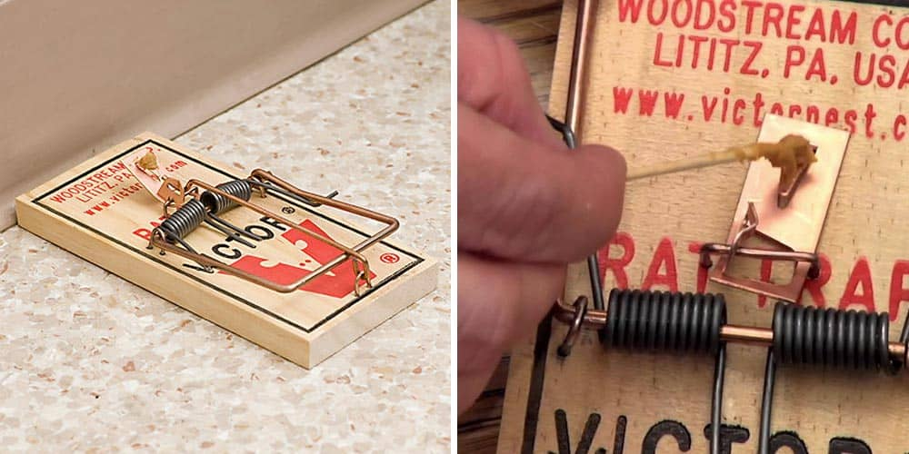Victor Metal pedal rat trap - the best snap trap