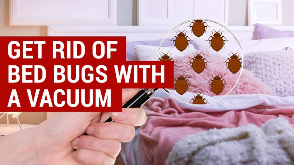 How To Get Rid Of Bed Bugs With A Vacuum City Pests