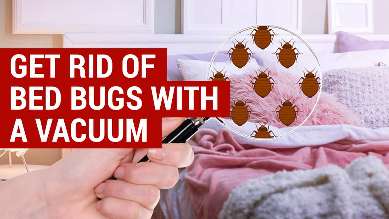 how to get rid of bed bugs with a vacuum