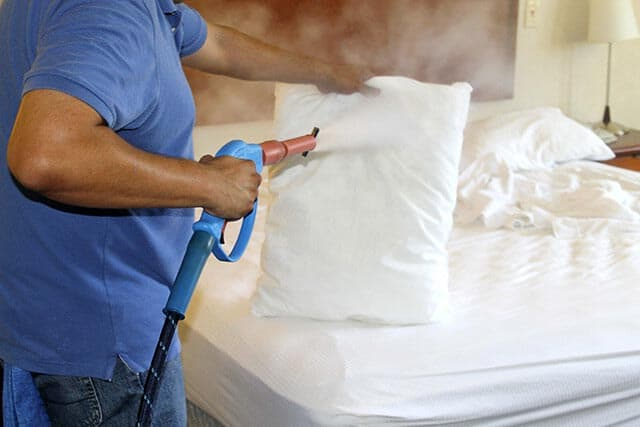 steaming bed bugs