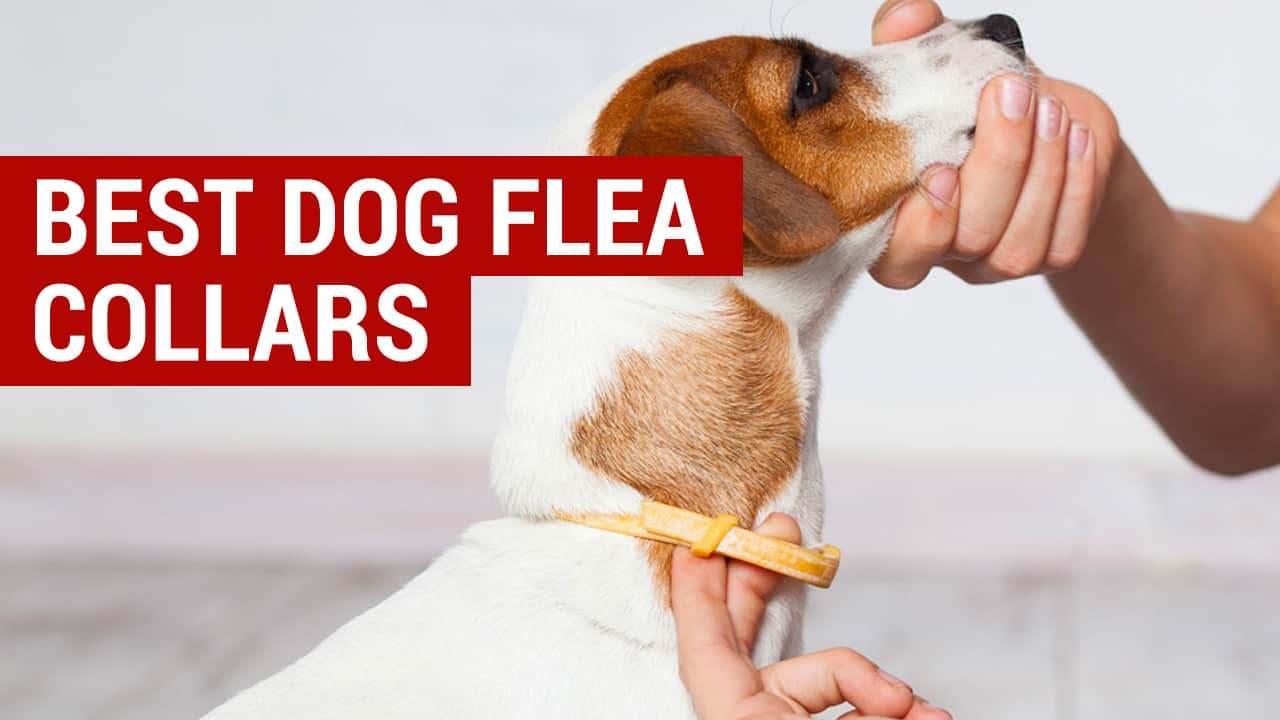 best dog flea collars