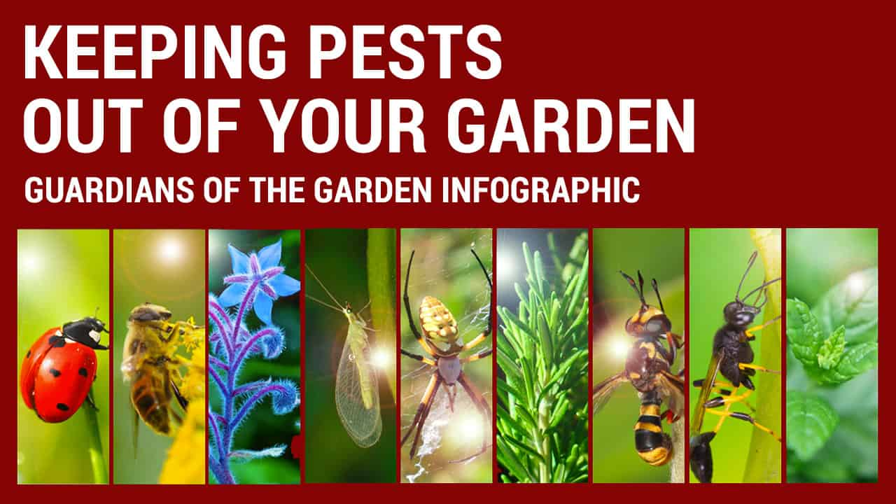 how to get pests out of your garden
