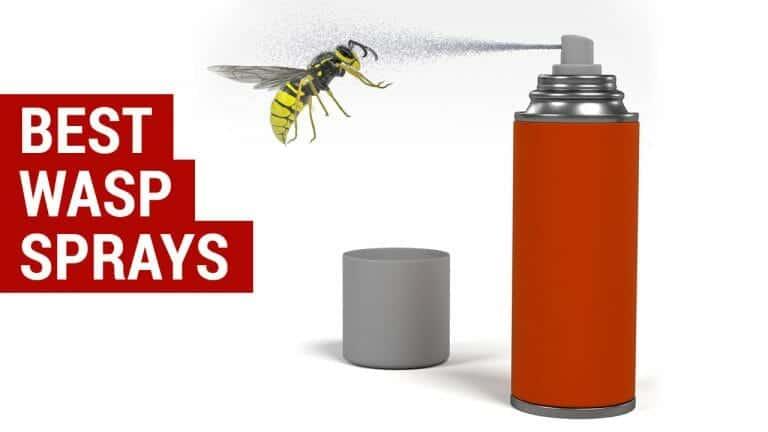 best wasp sprays