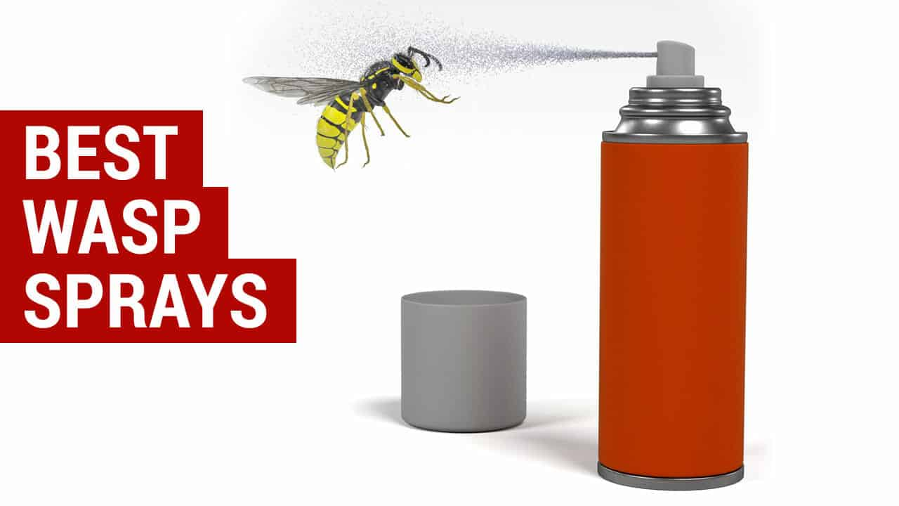 https://citypests.com/wp-content/uploads/2018/09/best-wasp-sprays-reviews.jpg