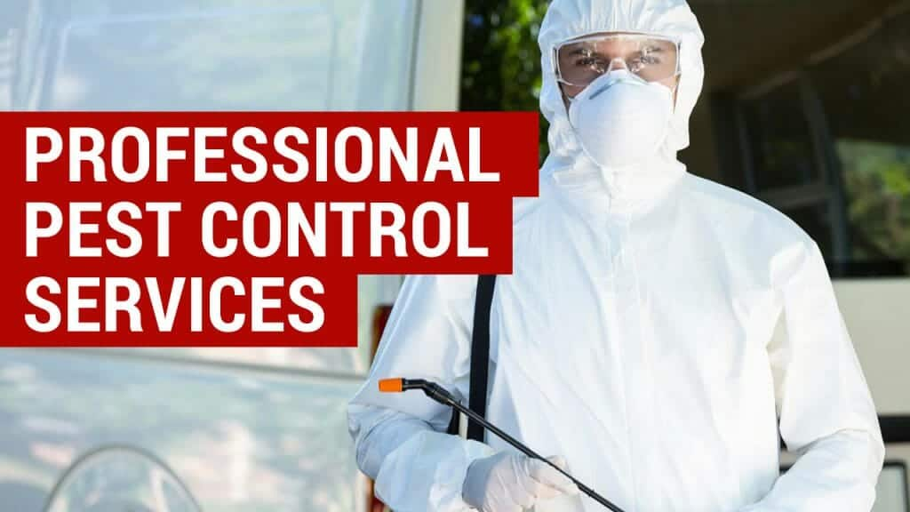 when to pay for professional pest control