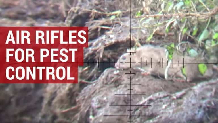 best air rifles for shooting rats