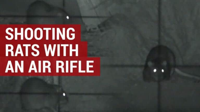shooting rats in your garden with an air gun or rifle
