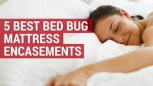 5 of the best bed bug mattress encasements
