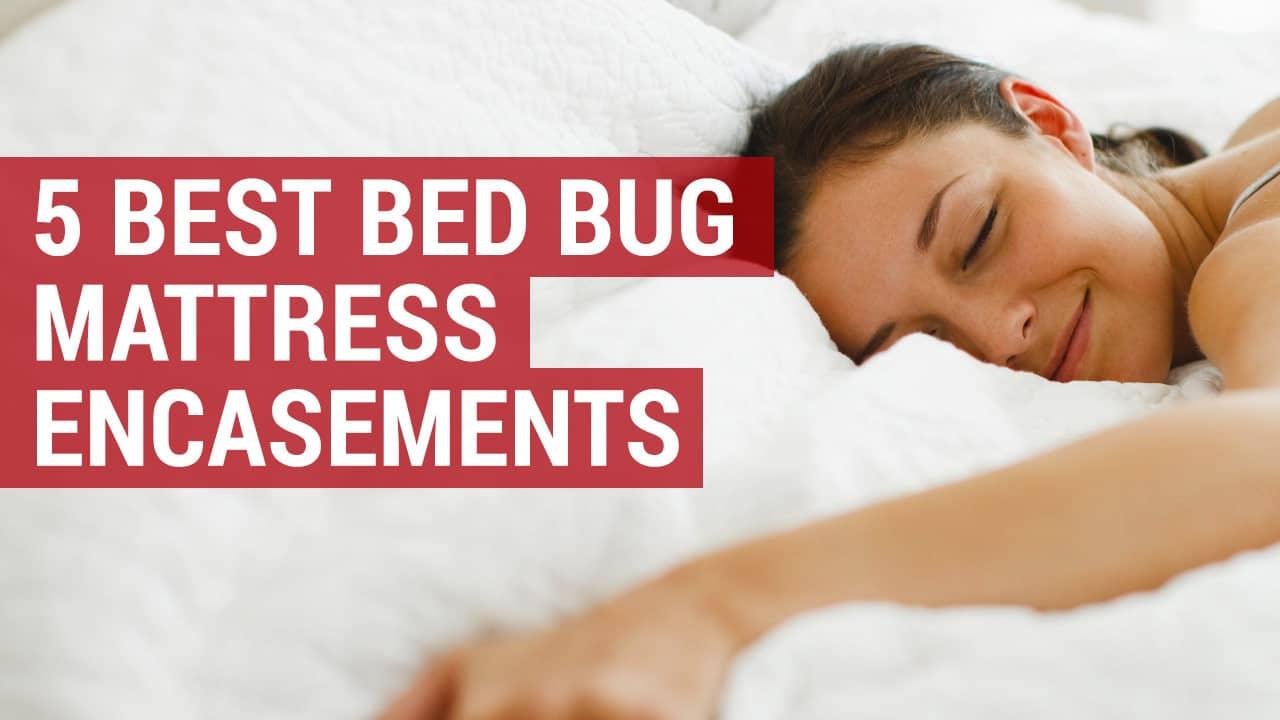 5 of the best bed bug mattress encasements
