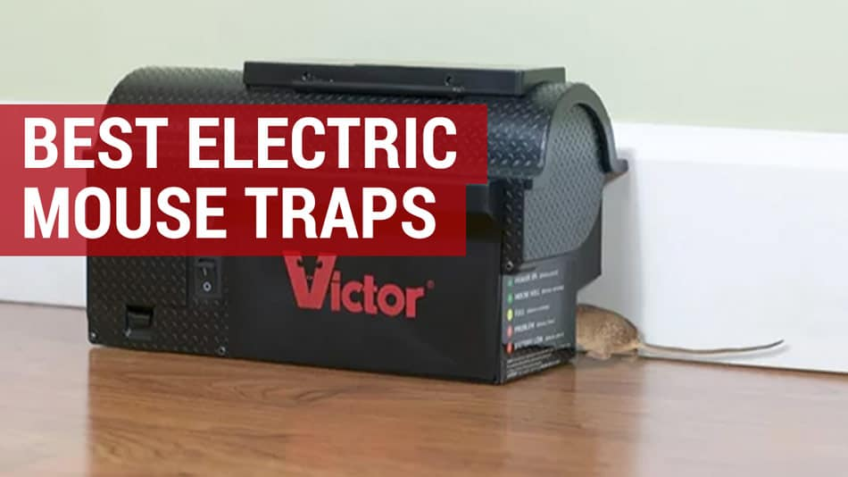 best electric mouse traps