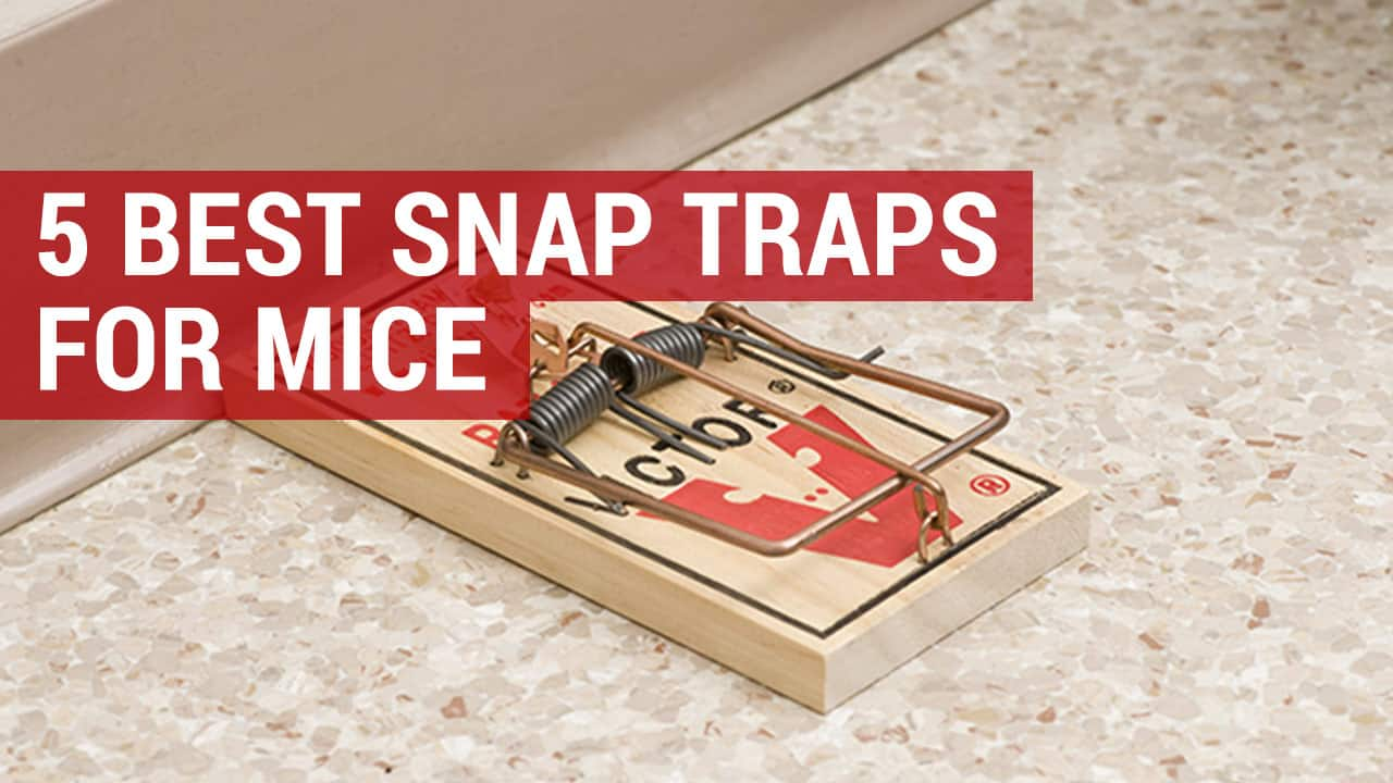 best snap traps for mice and rats