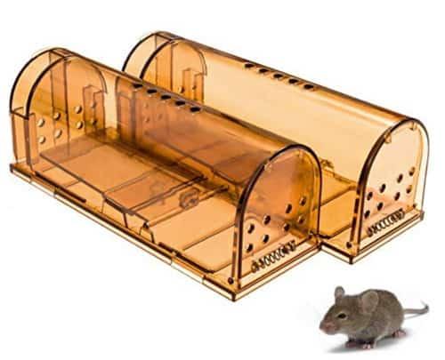 ea83ae79709 6 Best Humane Mouse Traps | No-kill Mouse Trap Reviews | City Pests