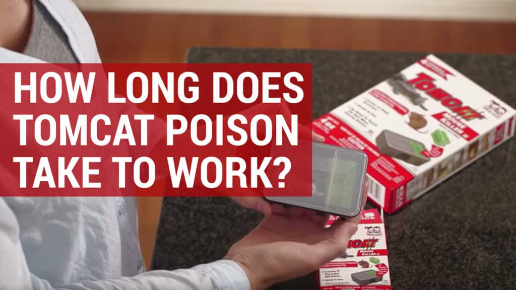 how long does tomcat rat poison take to work