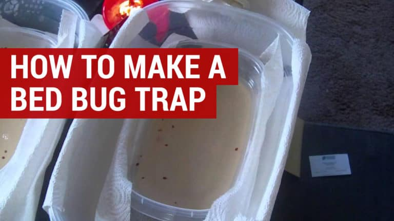 how to make a bed bug trap