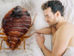sleeping with bed bugs