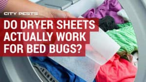 bed bug dryer sheets