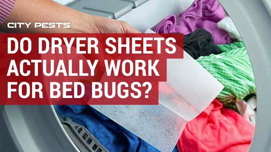 bed bug dryer sheets