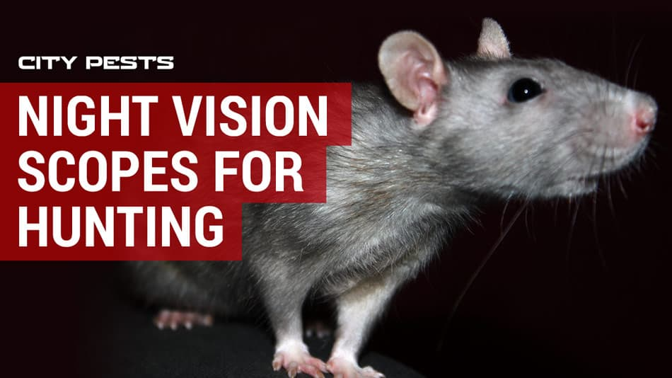 best night vision scopes for hunting rats