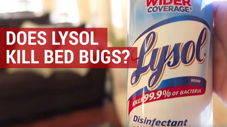 does lysol kill bed bugs