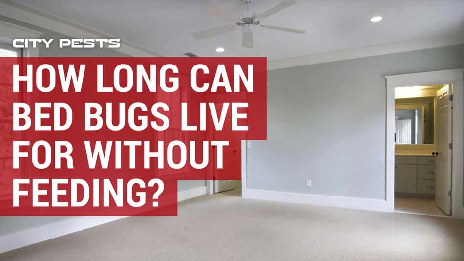 how long can bed bugs live for in an empty house