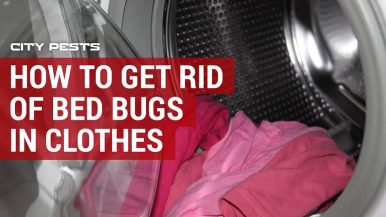 how to get rid of bed bugs in clothes and luggage