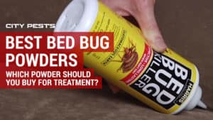 best bed bug powders