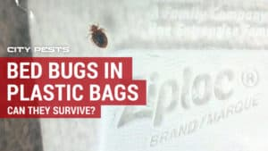 how long does it take to kill bed bugs in plastic bags