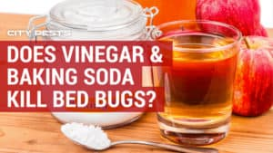 does vinegar and baking soda kill bed bugs