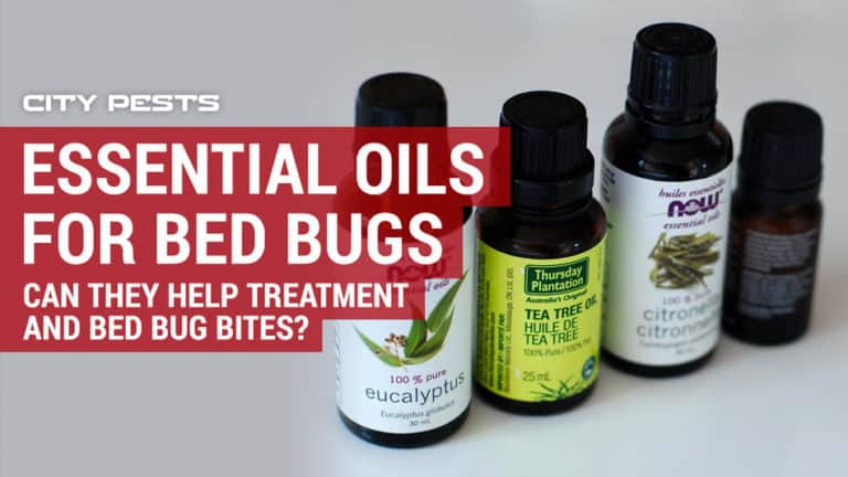 essential oils for bed bugs do they really work