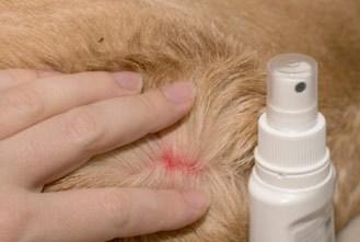 use a flea spray for dogs