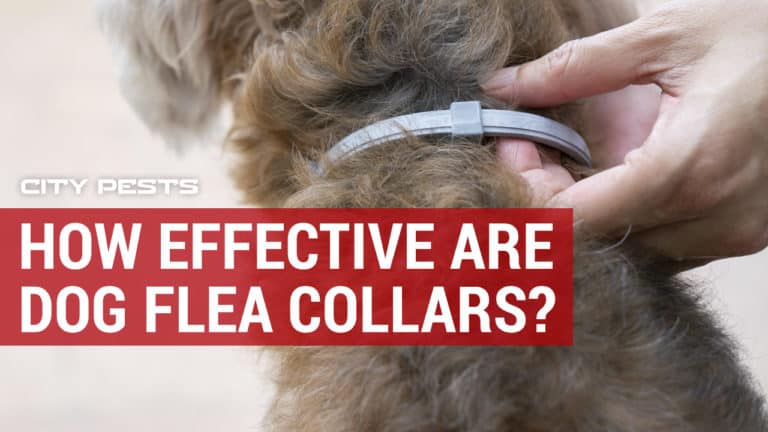 how effective are dog flea and tick collars