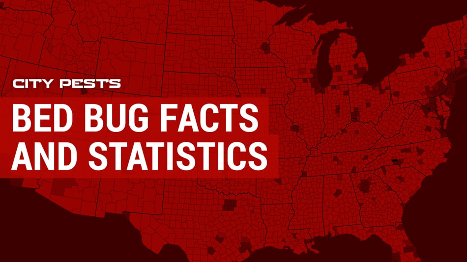 Bed Bug Facts and Statistics 2019