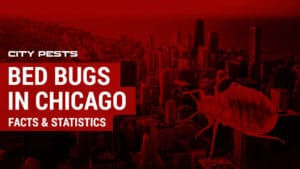 bed bugs chicago