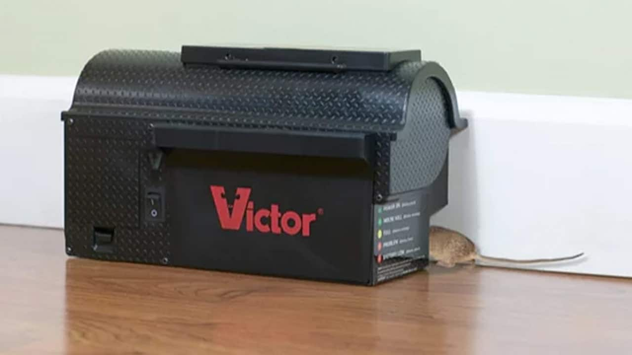 Place rat traps in your attic