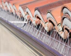 bird spikes or coils