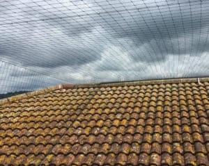 install bird netting