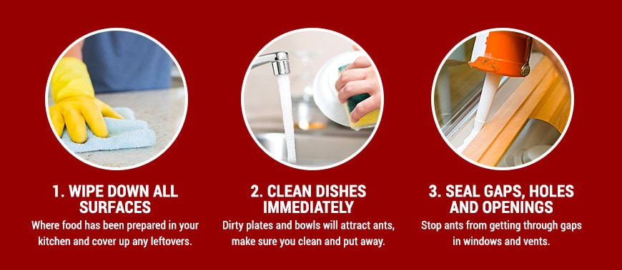 Natural ways to get rid of ants in your house