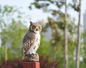 owl visual bird deterrent