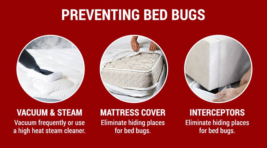 preventing bed bugs