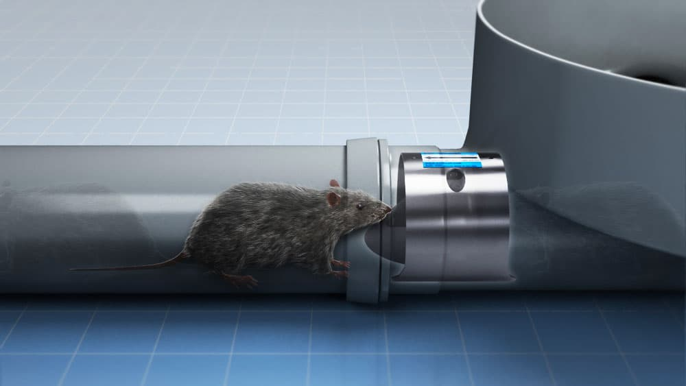 use a rat flap to stop rats from accessing drains