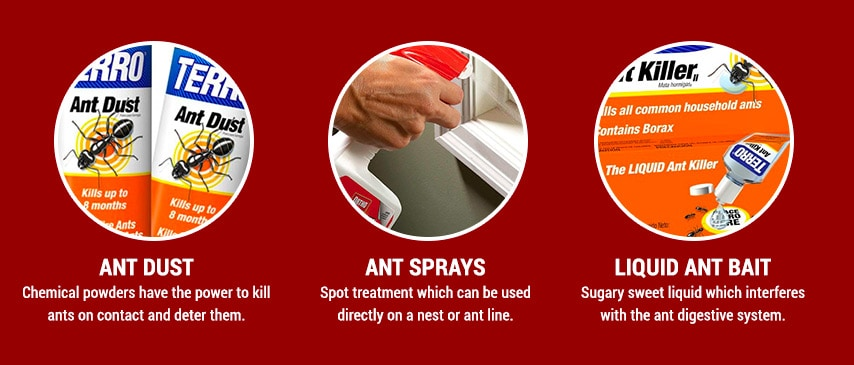 use ant sprays and powders