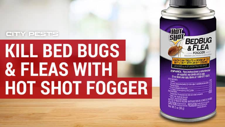 hot shot fogger for bed bugs and fleas