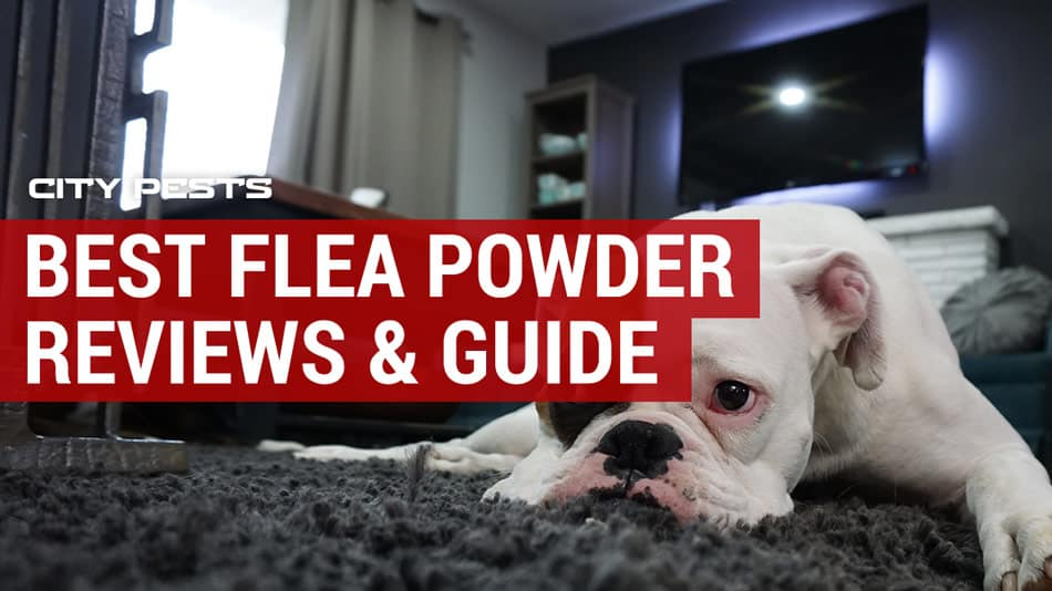 best flea powder reviews