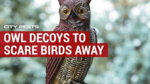 best owl decoys to scare birds away